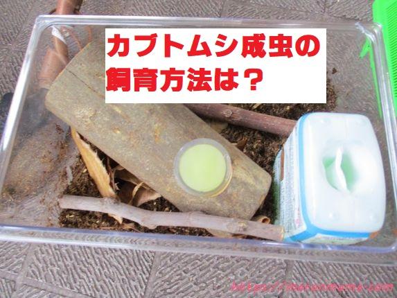 カブトムシ成虫の飼育セット。初心者でも簡単な飼育方法を紹介します。