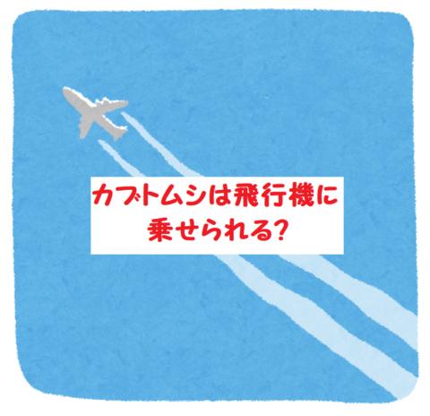 カブトムシを飛行機 スカイマーク国内線に持ち込みする条件や注意点は?