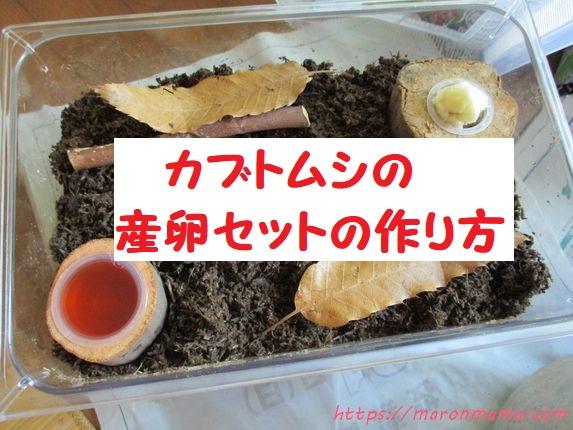 カブトムシのメスに卵を産ませる方法は?産卵セットの組み方を紹介
