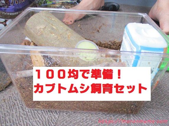 100均でカブトムシの飼育セットを準備しよう!クワガタにもオススメ